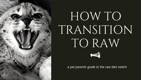 How to transition to a Raw Diet