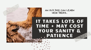 An old dog can learn new tricks, but it takes a lot of time and it may cost you your sanity and patience