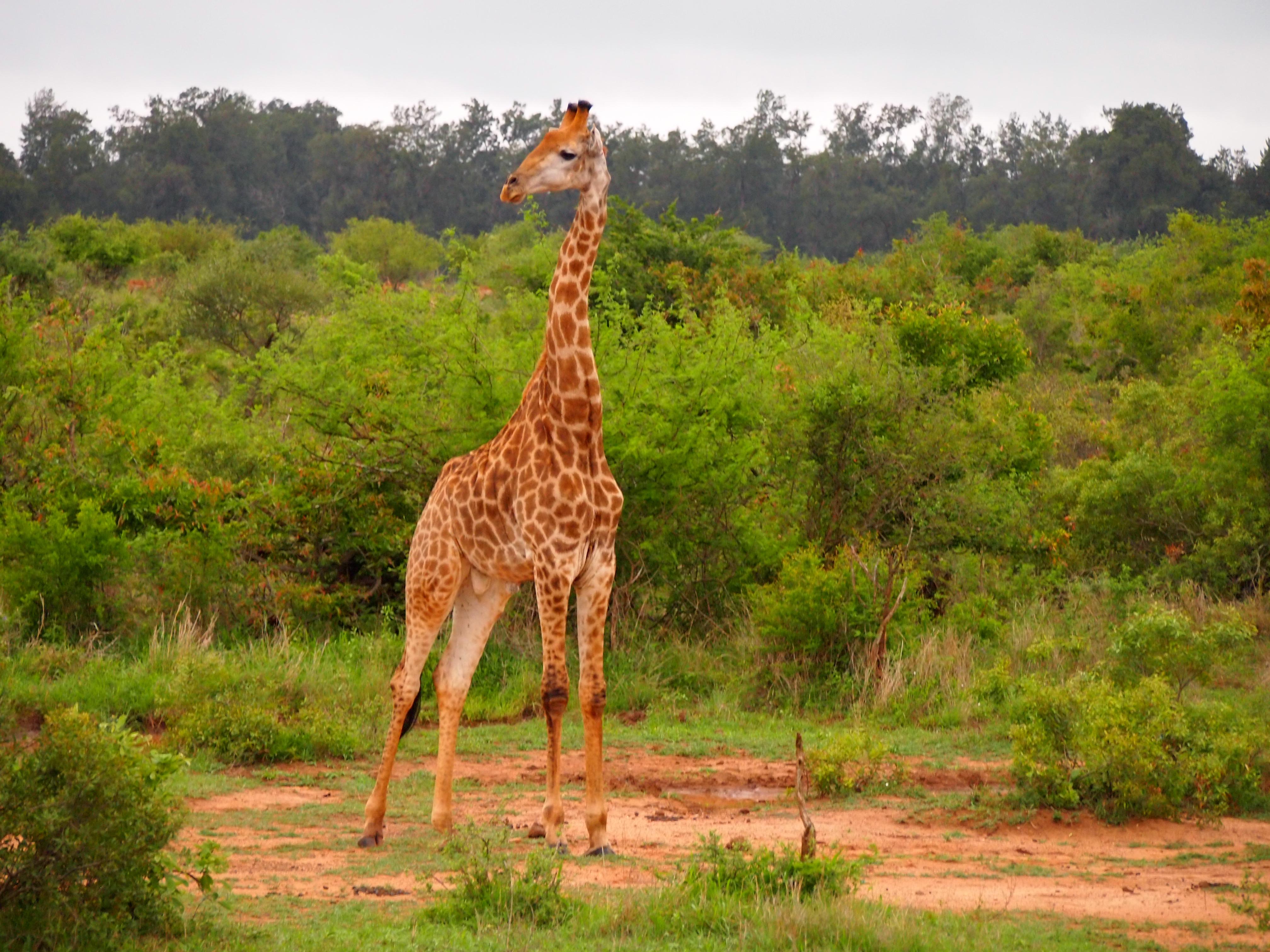 A tall guy