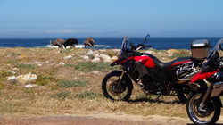 Bikes and Ostriches on the beach