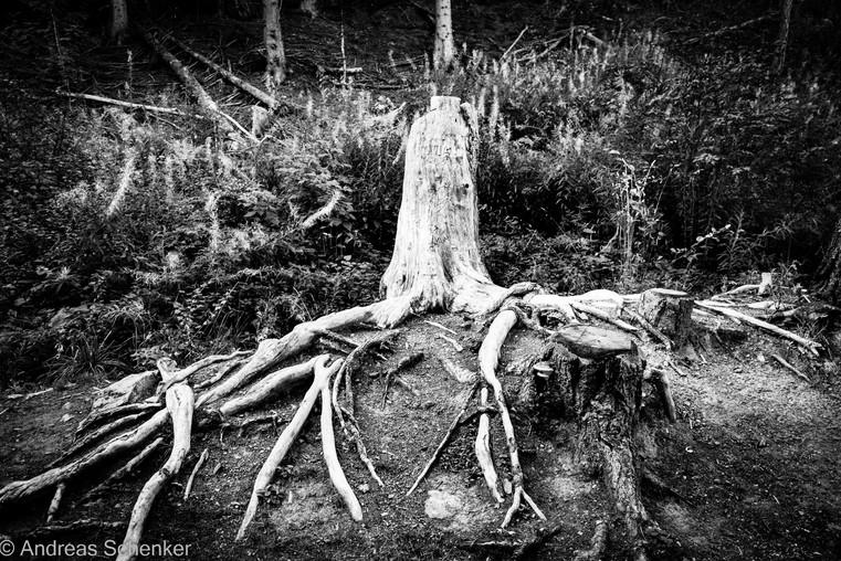 Reisen_Natur_051.jpg