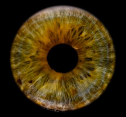 Andi_Iris-002_web.jpg