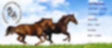 sydney equestrain supplies.jpg