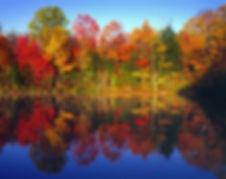 Autumn-Trees-Lake.-2943.jpg