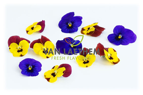 Kleine viooltjes
