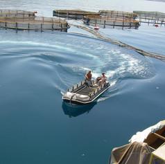 suf fish 2.jpg