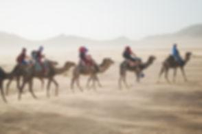 sahra dessert camels.jpg