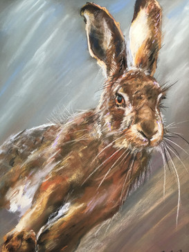 Running hare sketch in pastel