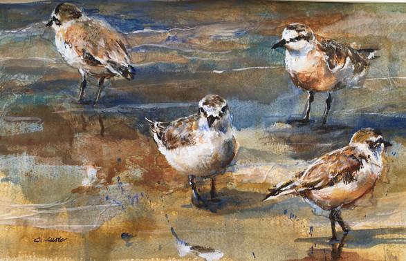 S.A Birds collage
