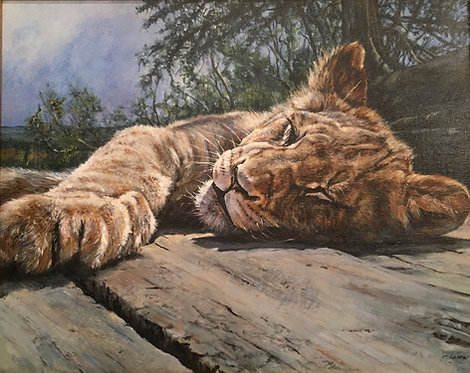 """""""Young lion basking"""""""