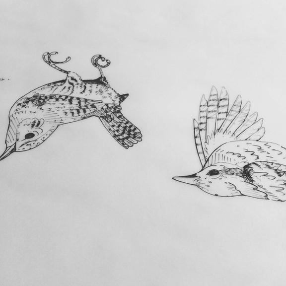 bird drawing 60.jpg