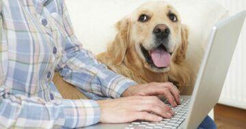 State lavorando da casa insieme al vostro cane? Ecco 3 consigli + 1 segreto per evitare distrazioni