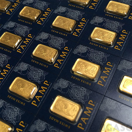pamp gold picture.jpg