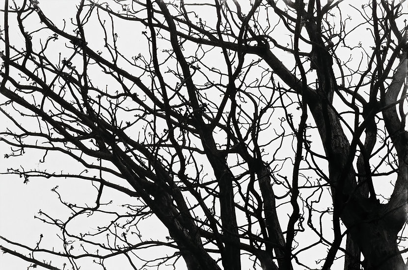 KNOT, 2007 (BLACK AND WHITE SERIES) - Ken Kung