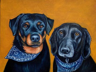 """""""Untitled"""" pet portrait"""