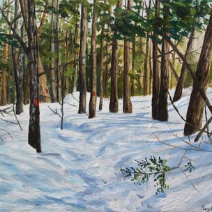 """""""Douglas Mountain- Nature Trail"""""""