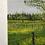 "Thumbnail: ""Dover-Foxcroft Dandelions"" 5x7 original oil painting"