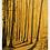 "Thumbnail: ""Eagle Scout"" 5x7 ochre print"