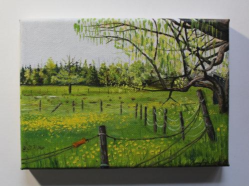 """Dover-Foxcroft Dandelions"" 5x7 original oil painting"