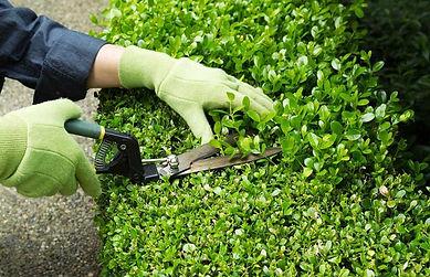 Servicios de Jardinerías