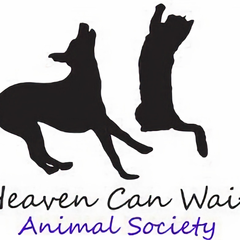 Heaven Can Wait-Cat Clinic