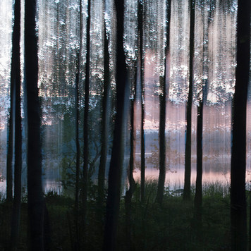 Rantapuut II / Waterfront Trees II 2015 Chromaluxe Metal Print, 40 cm x 40 cm  3/10