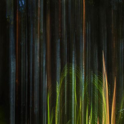 Metsän seinä / Forest Wall 2015 Chromaluxe Metal Print, 40 cm x 40 cm  1/10