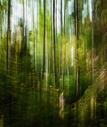 Metsämaisema / Forest Landscape 2015 Fotosec (pigmenttivedos akryylille /  pigment print on acrylic)  130 cm x 110 cm 2/5 + 2 ap.