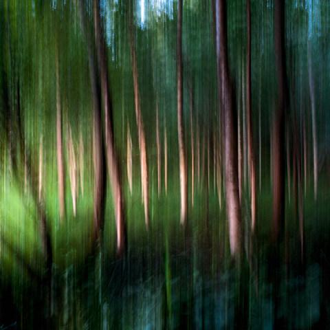 Rantaniitty / Meadow 2015 Chromaluxe Metal Print, 110 cm x 100 cm  1/5 + 2 ap.
