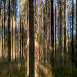 Metsä olioi / Forest Figures 2016 Chromaluxe Metal Print, 40 cm x 40 cm 1/10