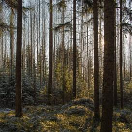 Kevätaurinko/ Spring Sun 2016 Chromaluxe Metal Print, 40 cm x 40 cm 1/10