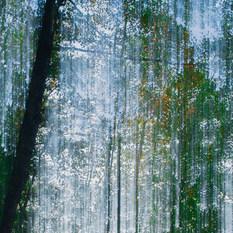 Siniset lehdet / Blue Leaves 2015 Chromaluxe Metal Print, 40 cm x 40 cm  4/10