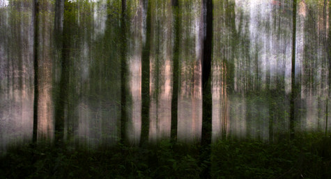Rantapuut /  Waterfront Trees 2015 tuloste kankaalle, Print on Canvas 130 cm x 240 cm 1/3 + 2 ap