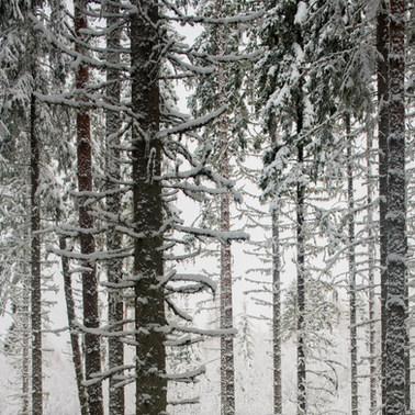 Ensilumi /First Snow 2017 Chromaluxe Metal Print, 40 cm x 40 cm  1/10
