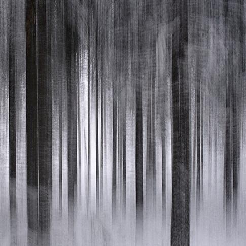 Metsä_1_DSC3449_40x40.jpg