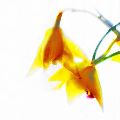 flower_fading_away_DSC7705 copypieni cop