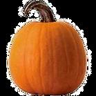pumpkin3_edited.png