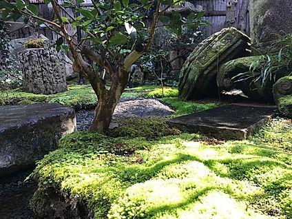新緑の苔庭.jpg