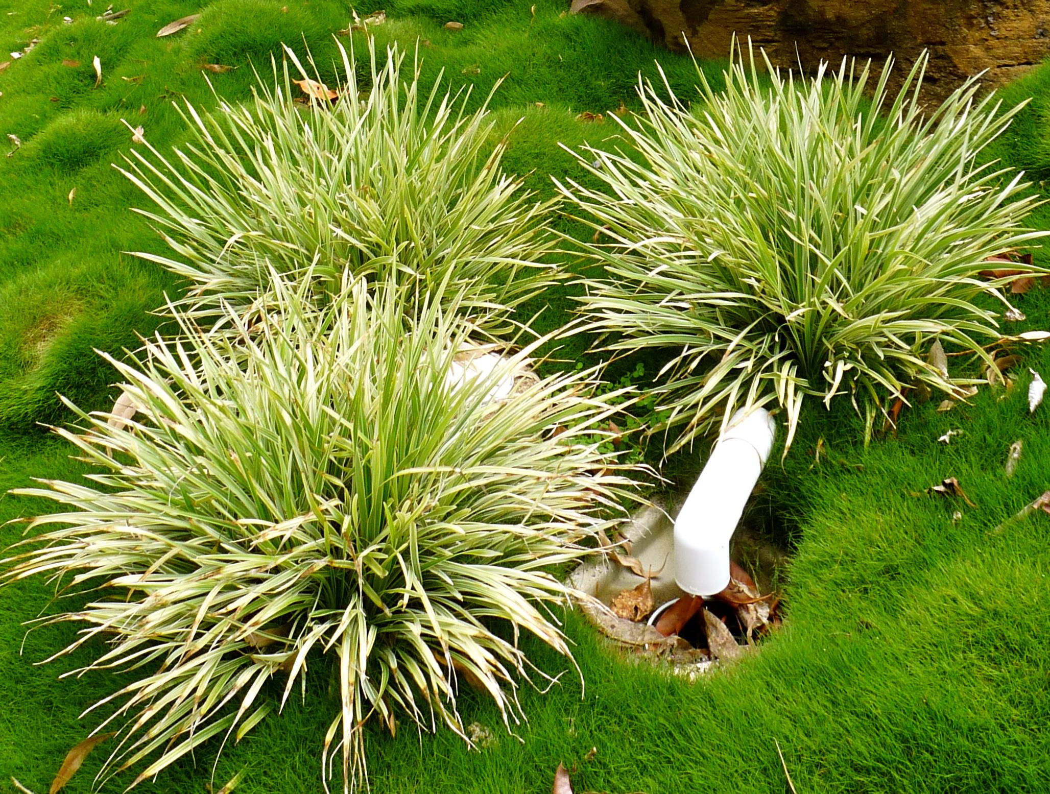 Korora Feature Garden