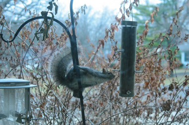 Keep Out of My Bird Feeder!