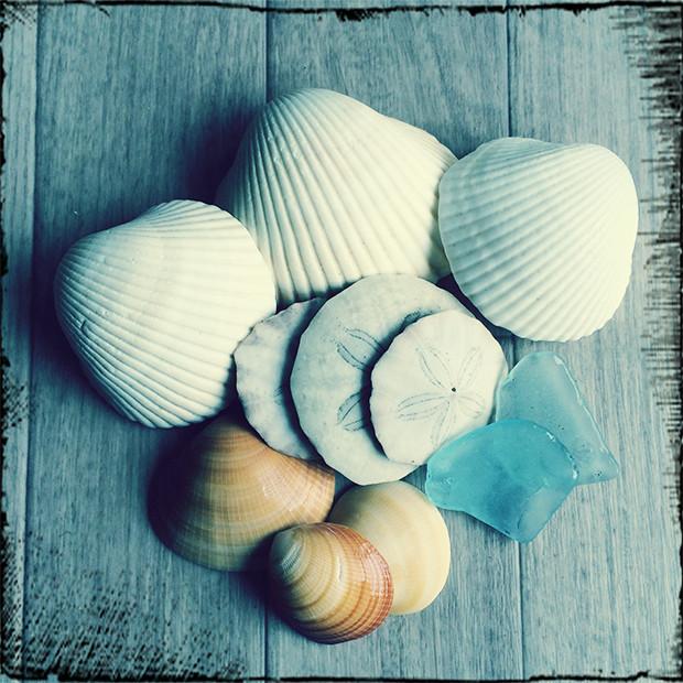海で拾った貝殻やシーグラス|副腎疲労HP