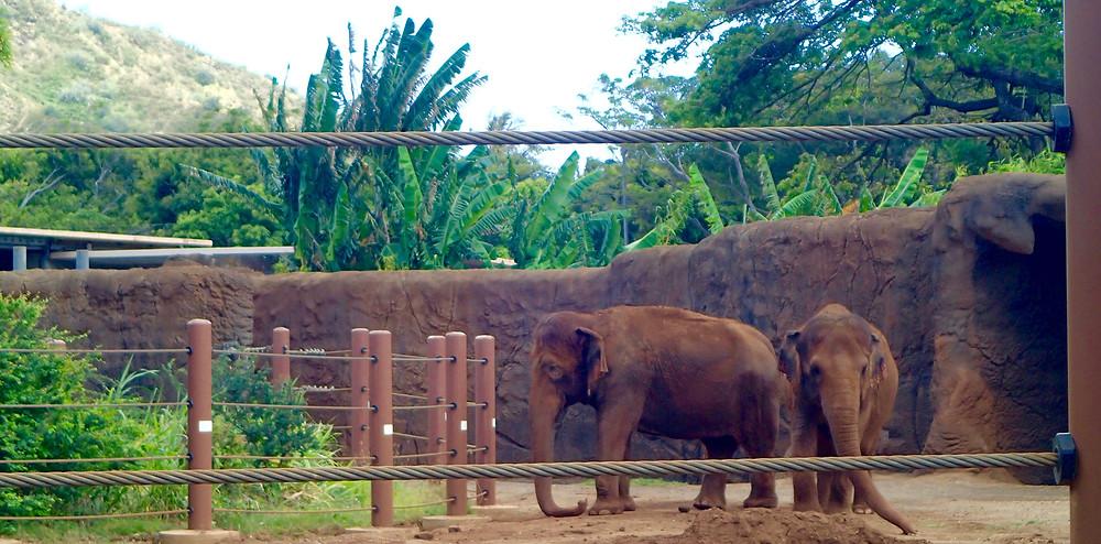 ホノルル動物園の象|副腎疲労HP