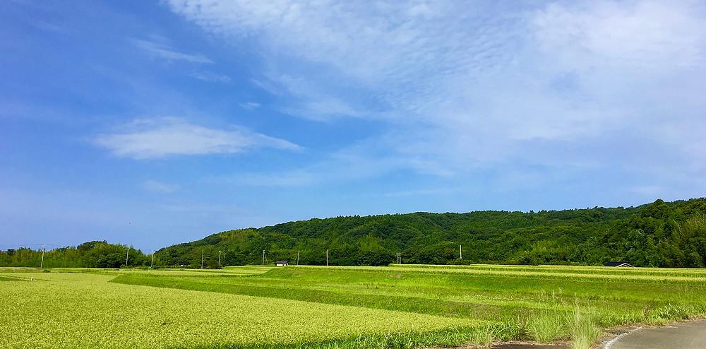 佐渡島の青い空とのどかな畑 副腎疲労HP