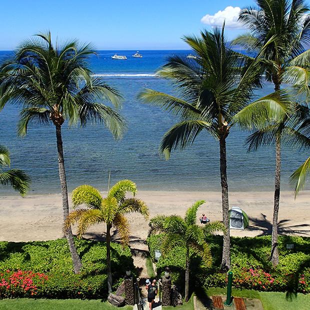 マウイ島のヤシの実と海|副腎疲労HP
