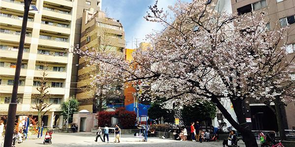 網代公園と満開の桜|副腎疲労HP