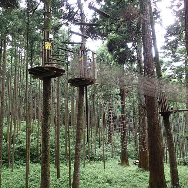 沢山の木にアスレチックが作られている|副腎疲労HP