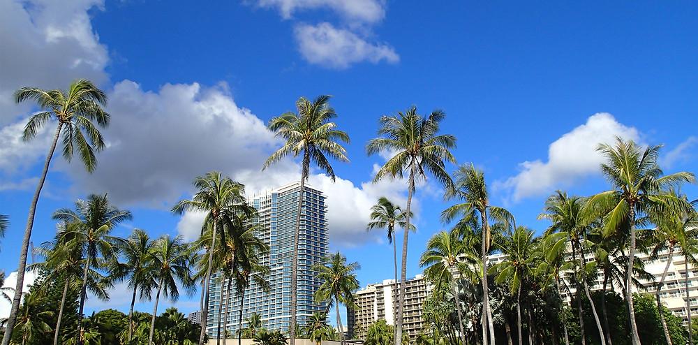ハワイの青い空とヤシの実|副腎疲労HP