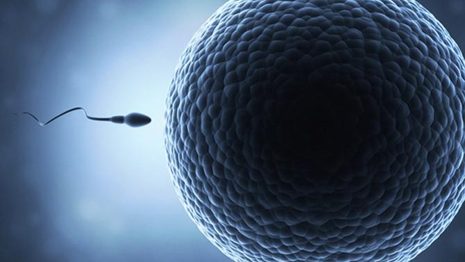 卵子にたどり着けるのは数億の精子の100万分の1!?