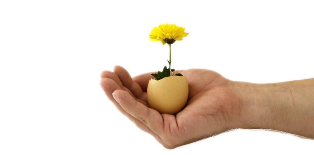 お花が咲いた卵が乗った手の平|副腎疲労HP