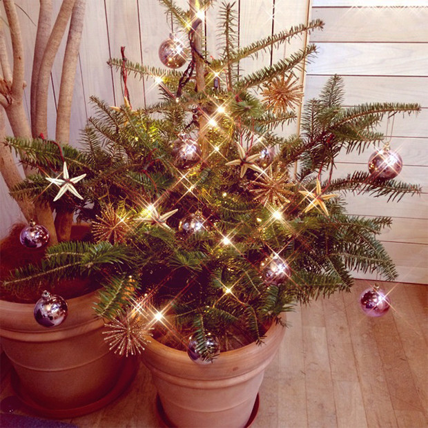 モミの木のクリスマスツリー|副腎疲労HP